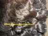 100% natural human hair machine weft
