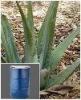 Aloe Vera Extract