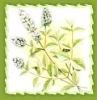 Pure Petitgrain oil