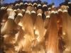 fashion hair ,wholesale human hair,,hair extension,wigs, hair bulk ,top quality ,long hair