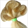 """hand tied weft, 100g,22"""", any color and type is ok, fair price and high quality"""