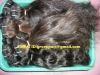human hair weft and weave