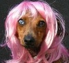 spring curl wigs for dogs
