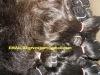 yaki straight machine weft hair